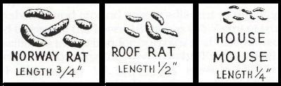 different kinds of rat poop