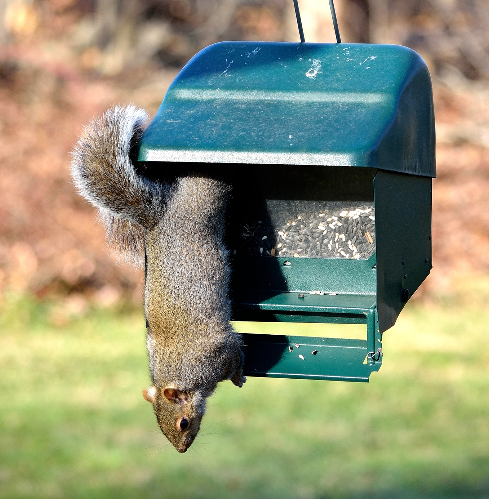 The best squirrel proof bird feeder action shot