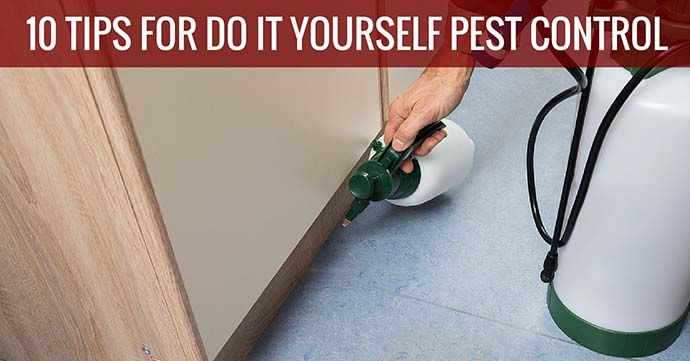 10 Tips For Do It Yourself Pest Control