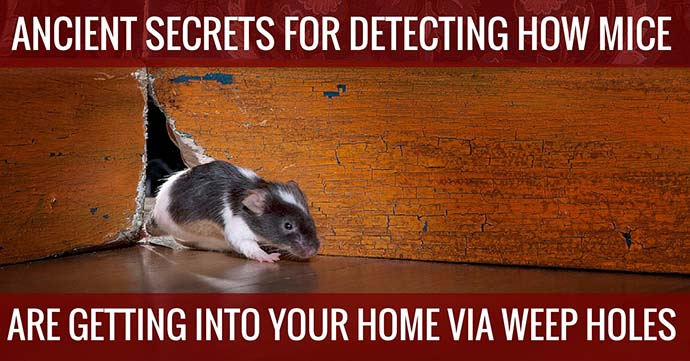 ancient secrest for detecting how mice are getting into your home via weep holes