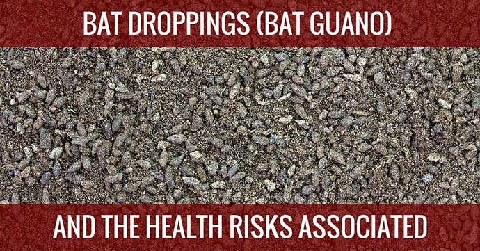 bat droppings