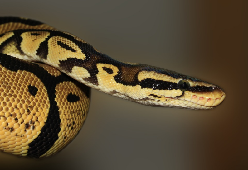 close-up-picture-of-a-serpent