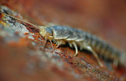 picture-of-insect
