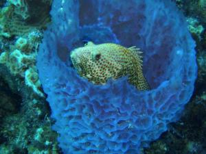 fish and sponge