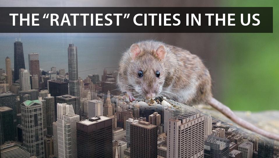 rat above a city