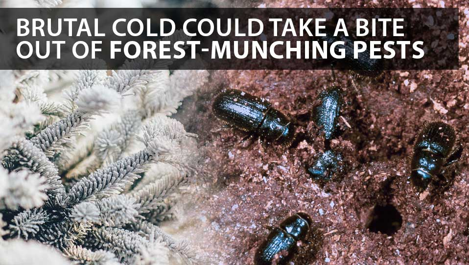 forest munching fest
