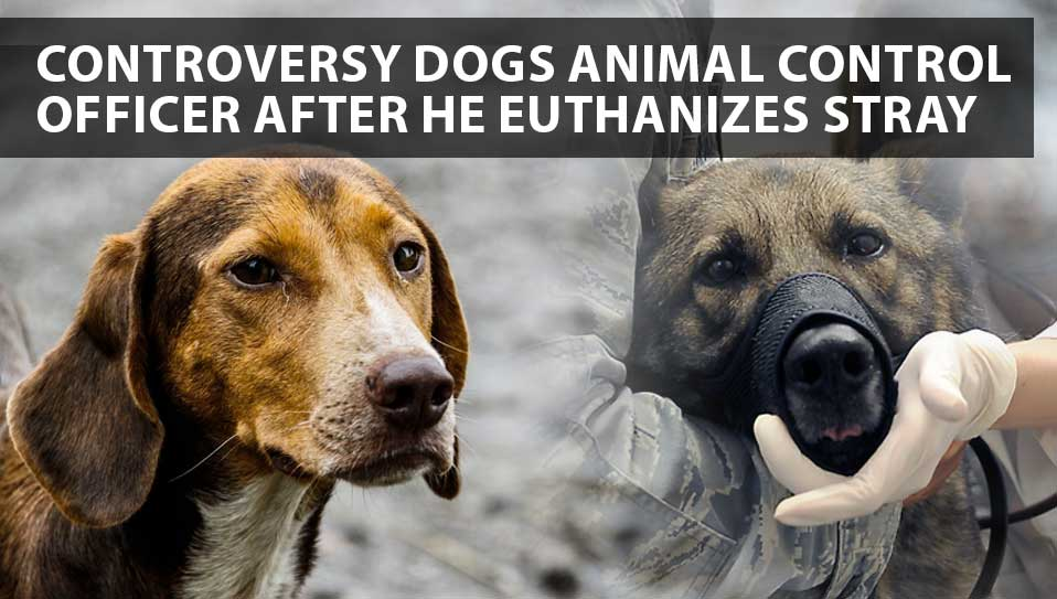 euthwnize controversy for stray dogs